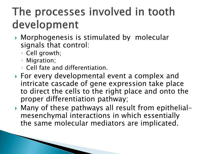 The processes involved in tooth development