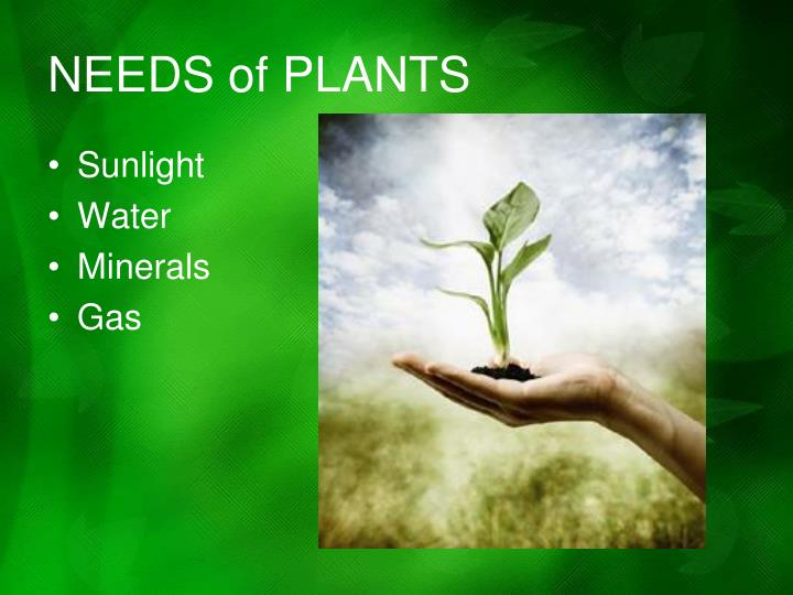 NEEDS of PLANTS