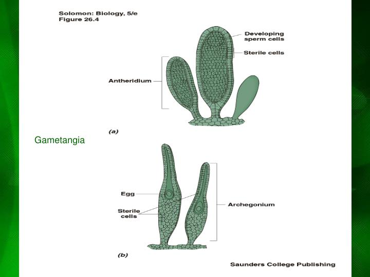 Gametangia