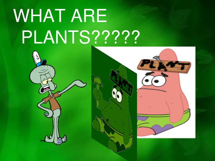 WHAT ARE PLANTS?????