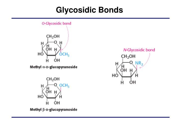 Glycosidic Bonds