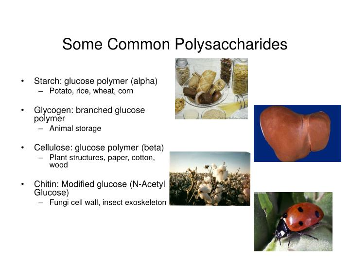 Some Common Polysaccharides