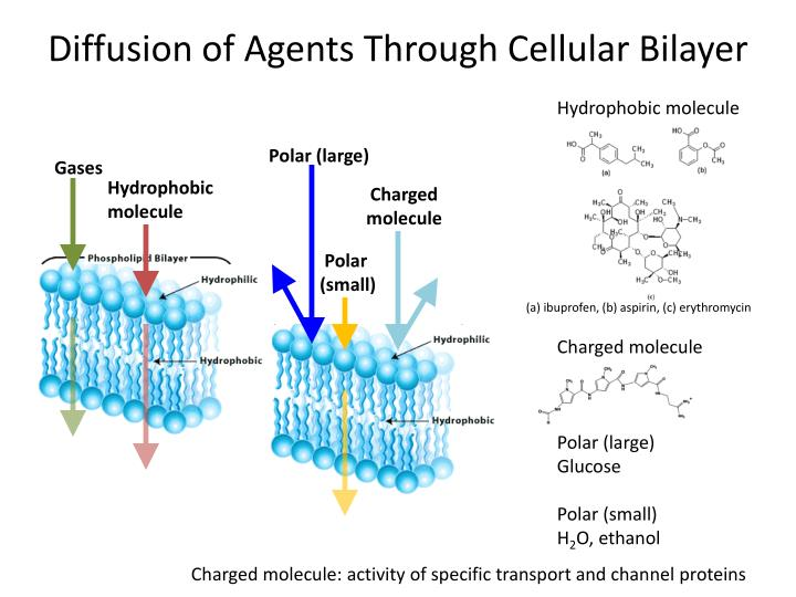 Diffusion of Agents Through Cellular