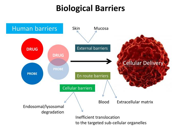 Biological Barriers