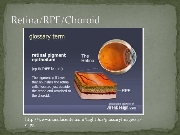 Retina/RPE/Choroid