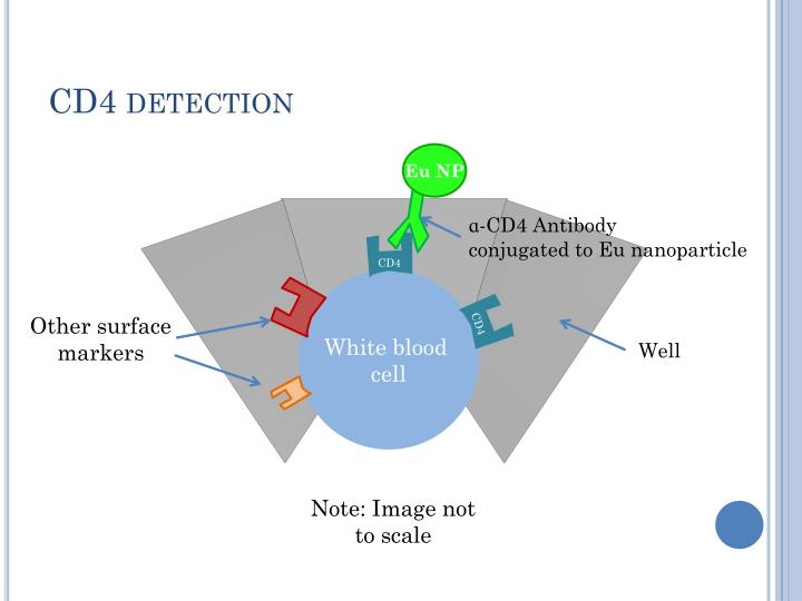 CD4 detection