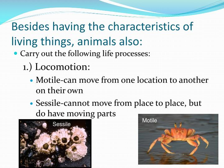 Besides having the characteristics of living things, animals also: