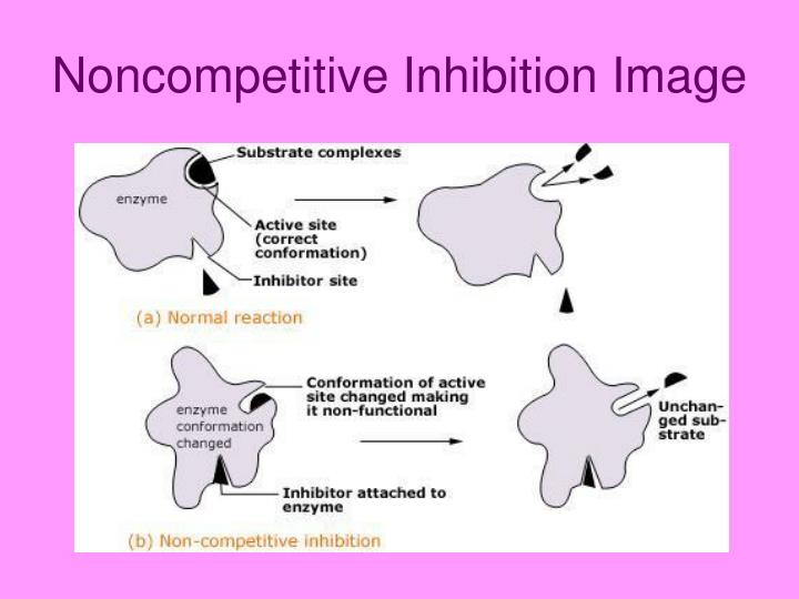 Noncompetitive Inhibition Image