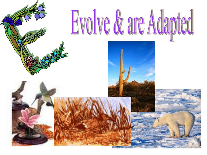 Evolve & are Adapted