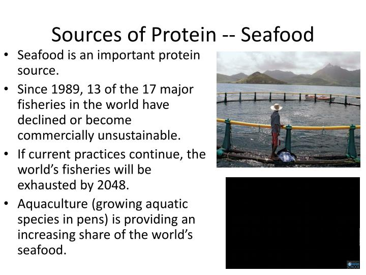 Sources of Protein -- Seafood