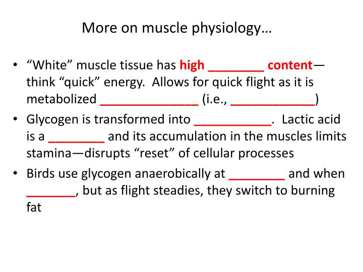 More on muscle physiology…