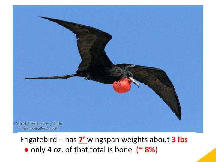 Frigatebird