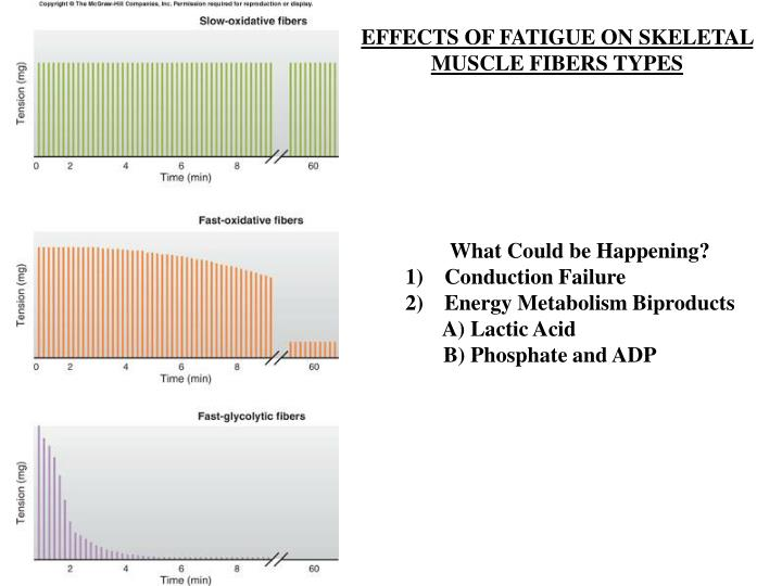 EFFECTS OF FATIGUE ON SKELETAL MUSCLE FIBERS TYPES