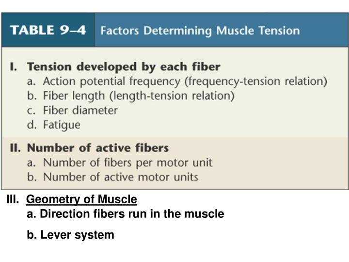 Geometry of Muscle