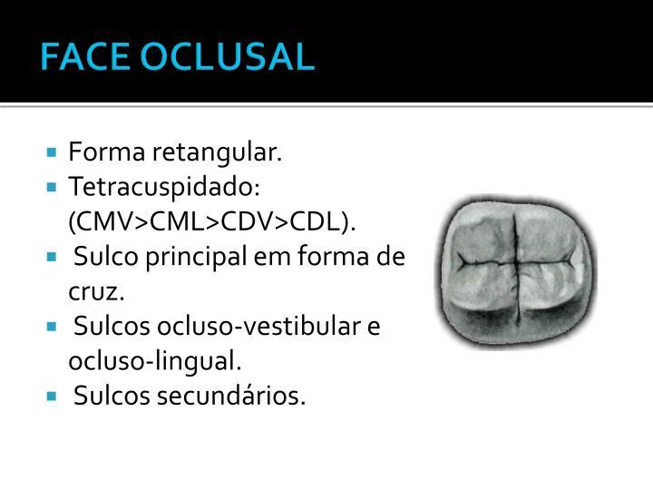 FACE OCLUSAL
