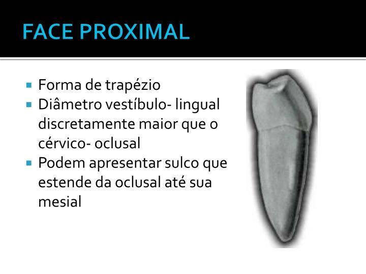 FACE PROXIMAL