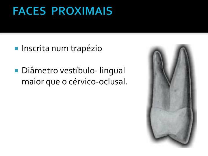 FACES  PROXIMAIS