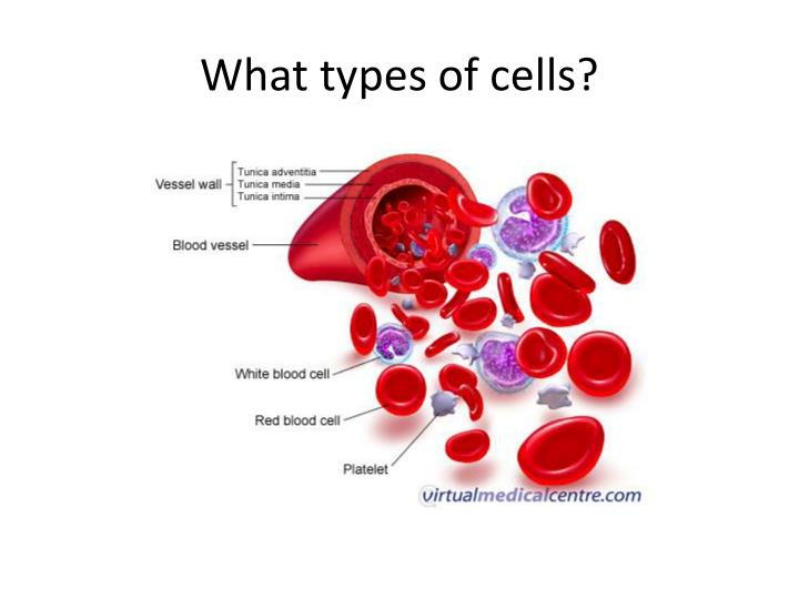 What types of cells?