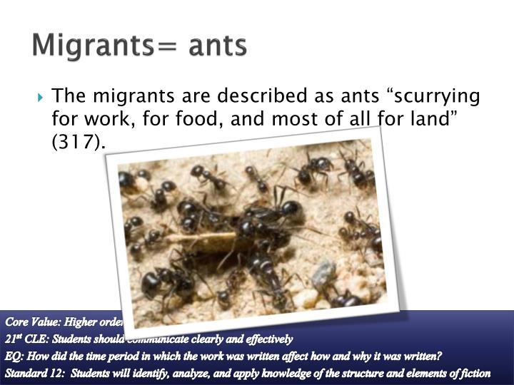 Migrants= ants