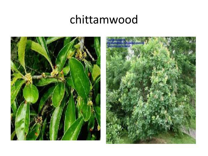 chittamwood