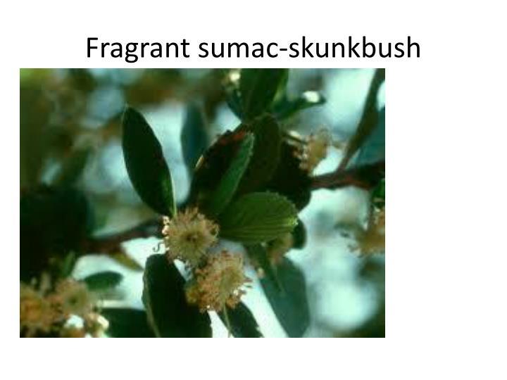 Fragrant sumac-