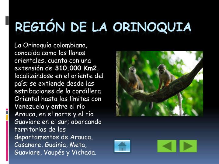 La Orinoquía colombiana, conocida como los llanos orientales, cuanta con una extensión de