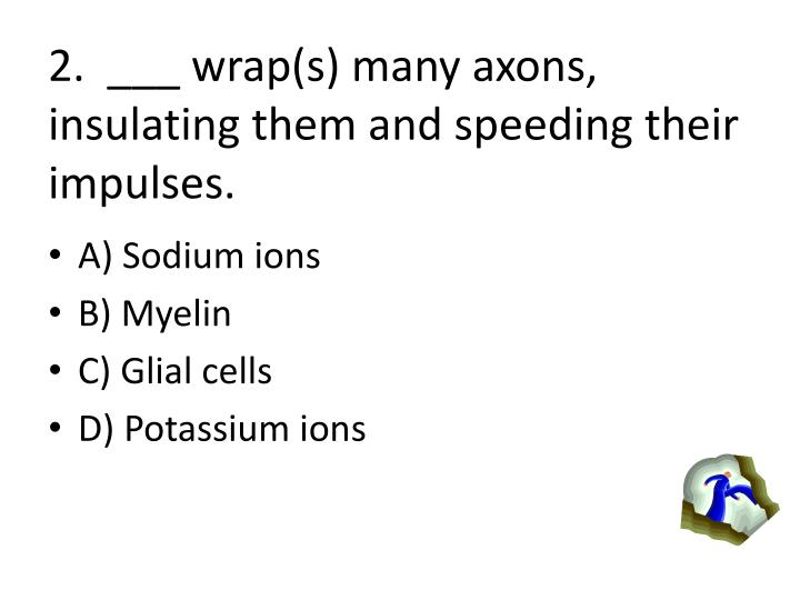 2.  ___ wrap(s) many axons, insulating them and speeding their impulses.