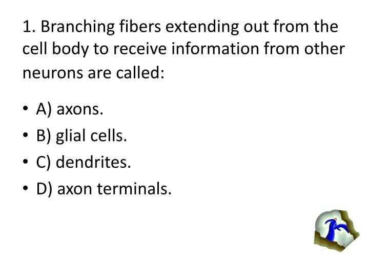 1. Branching fibers extending out from the cell body to receive information from other neurons are called: