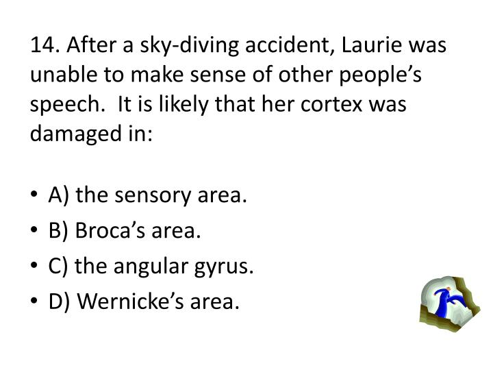 14. After a sky-diving accident, Laurie was unable to make sense of other peoples speech.  It is likely that her cortex was damaged in: