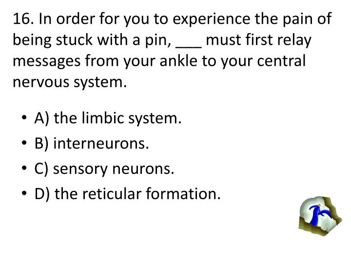 16. In order for you to experience the pain of being stuck with a pin, ___ must first relay messages from your ankle to your central nervous system.