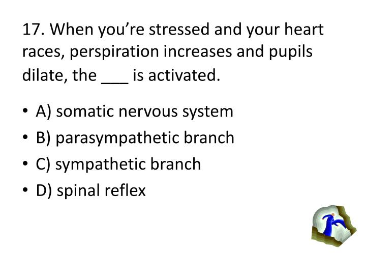 17. When youre stressed and your heart races, perspiration increases and pupils dilate, the ___ is activated.