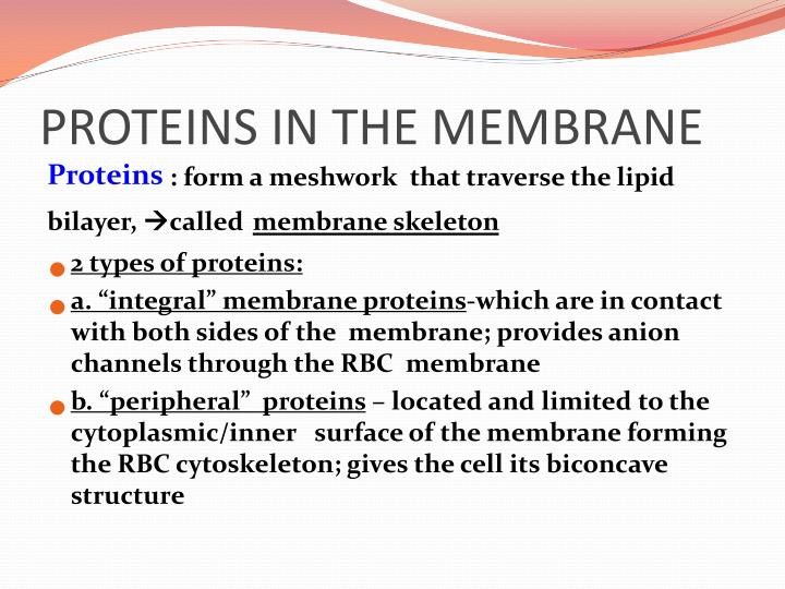 PROTEINS IN THE MEMBRANE