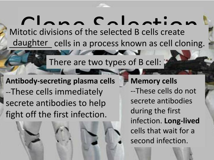 Clone Selection