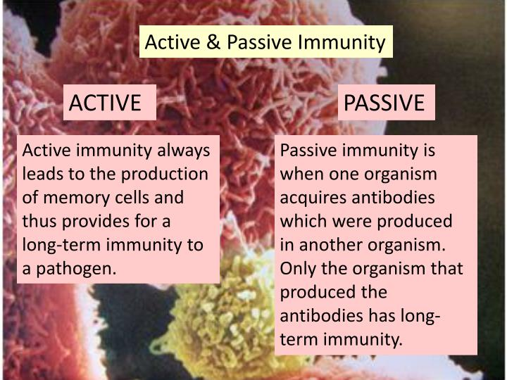 Active & Passive Immunity