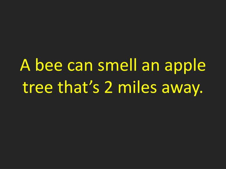 A bee can smell an apple tree that's 2 miles away.