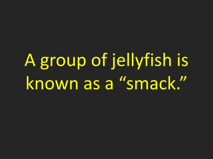 a group of jellyfish is known as a smack