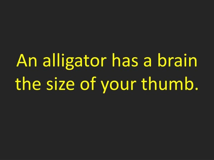 An alligator has a brain the size of your thumb.