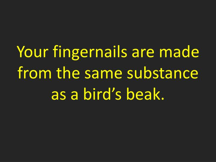 Your fingernails are made from the same substance as a bird's beak.