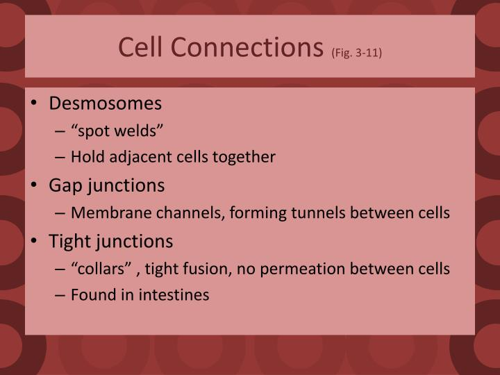 Cell Connections