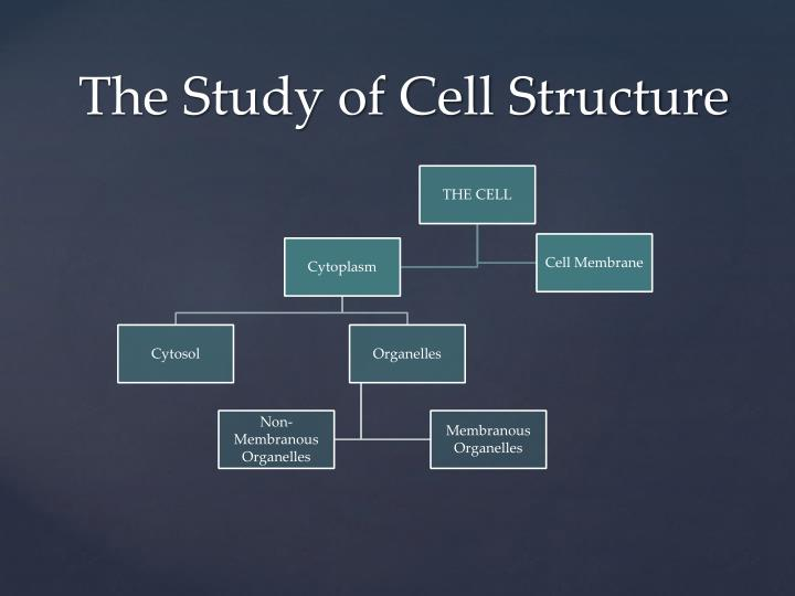 The Study of Cell Structure