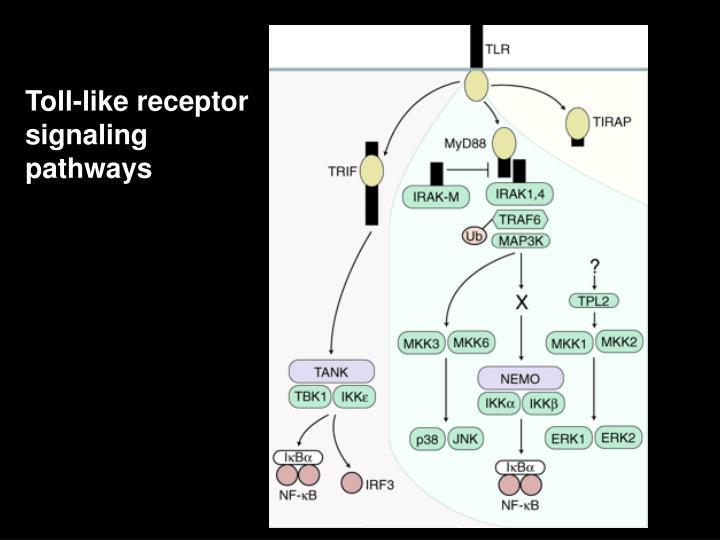 Toll-like receptor