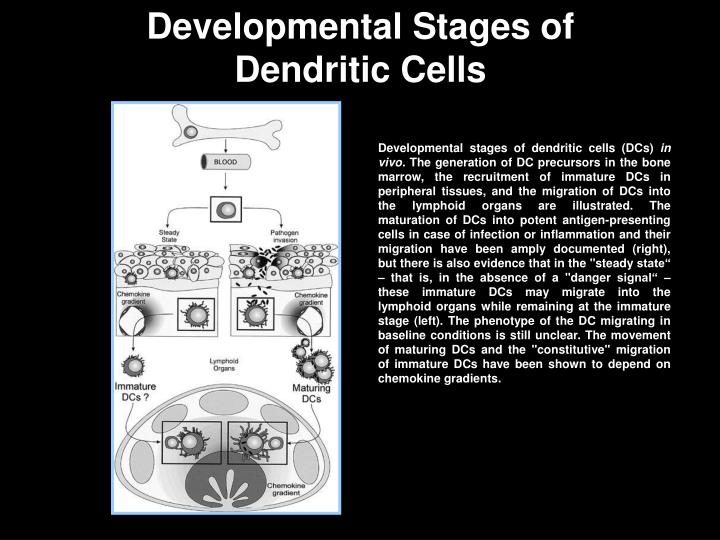 Developmental Stages of
