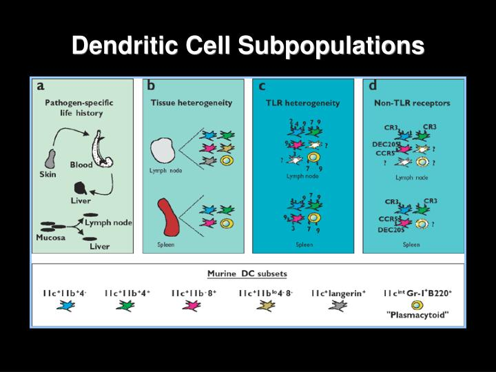 Dendritic Cell Subpopulations