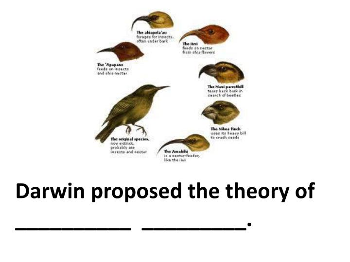 Darwin proposed the theory of __________  _________.