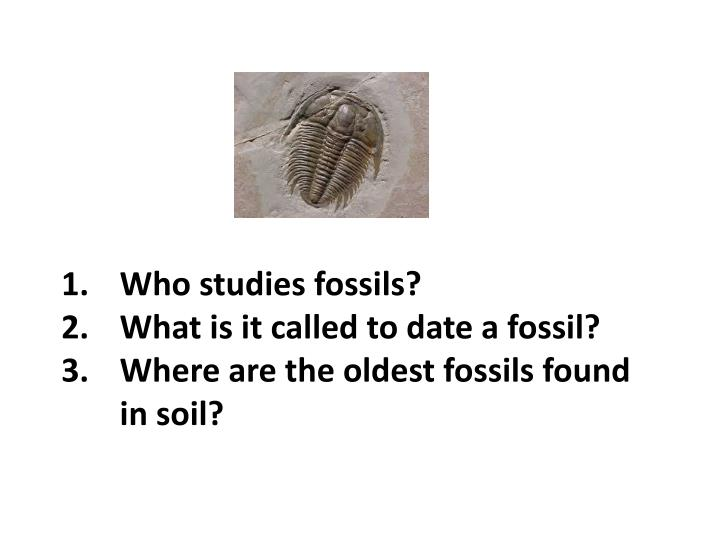 Who studies fossils?
