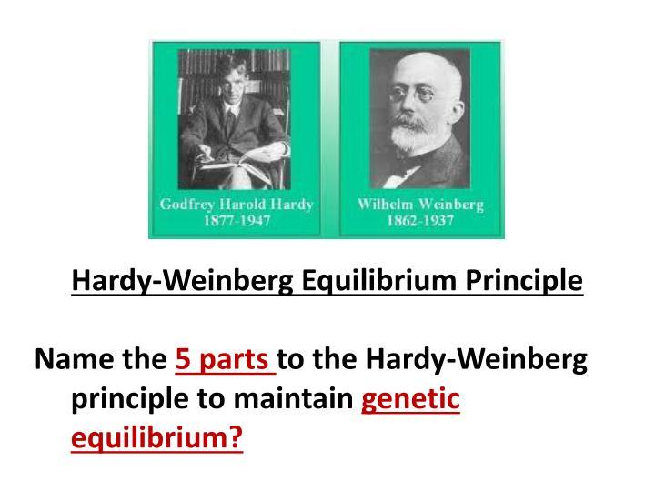Hardy-Weinberg Equilibrium Principle