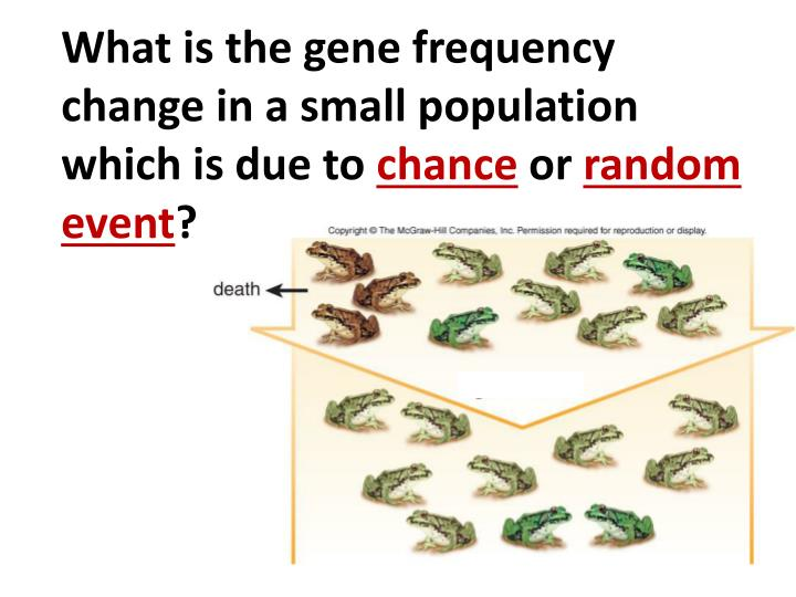 What is the gene frequency change in a small population which is due to