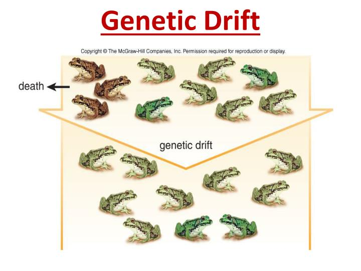 Genetic Drift