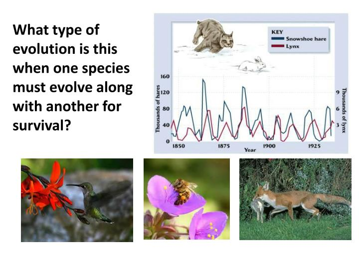 What type of evolution is this when one species must evolve along with another for survival?
