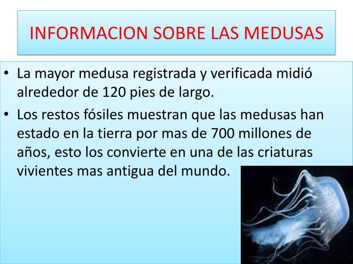 Ppt animales invertebrados powerpoint presentation id 2032446 - Como se alimentan las medusas ...